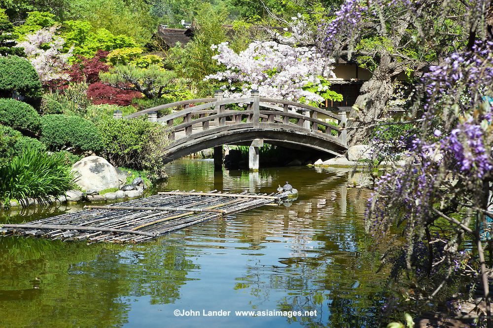 Hakone Garden is the oldest Japanese garden in the Western Hemisphere. The garden is set in eighteen acres of in the hills of Saratoga overlooking Silicon Valley. Visitors to Hakone Garden can experience the calming effect of a Japanese garden in Northern California.