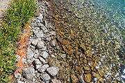 A shoreline pattern of green grass, orange pine needles, white rocks, yellow submerged rocks and green water at Glacier Lake. Eagle Cap Wilderness, Wallowa–Whitman National Forest, Wallowa Mountains, Columbia Plateau, northeastern Oregon, USA.