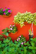 Hanging plants and garden, Burano, Veneto, Italy