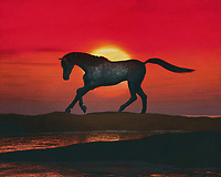 An Arabian horse enjoys its freedom on the beach at a red sunset. This coastal scene can be printed in different sizes and on different materials. Both on canvas, wood, metal or framed so it certainly fits into your interior. –<br /> -<br /> BUY THIS PRINT AT<br /> <br /> FINE ART AMERICA / PIXELS<br /> ENGLISH<br /> https://janke.pixels.com/featured/arabian-horse-on-the-beach-at-sunset-jan-keteleer.html<br /> <br /> <br /> WADM / OH MY PRINTS<br /> DUTCH / FRENCH / GERMAN<br /> https://www.werkaandemuur.nl/nl/shopwerk/Arabisch-paard-op-het-strand-bij-zonsondergang/797501/132?mediumId=1&size=70x55<br /> –<br /> -