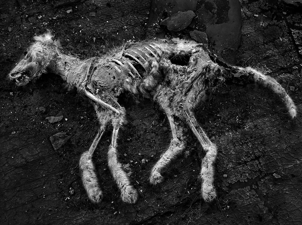Dog Carcass, Avonlea, SK