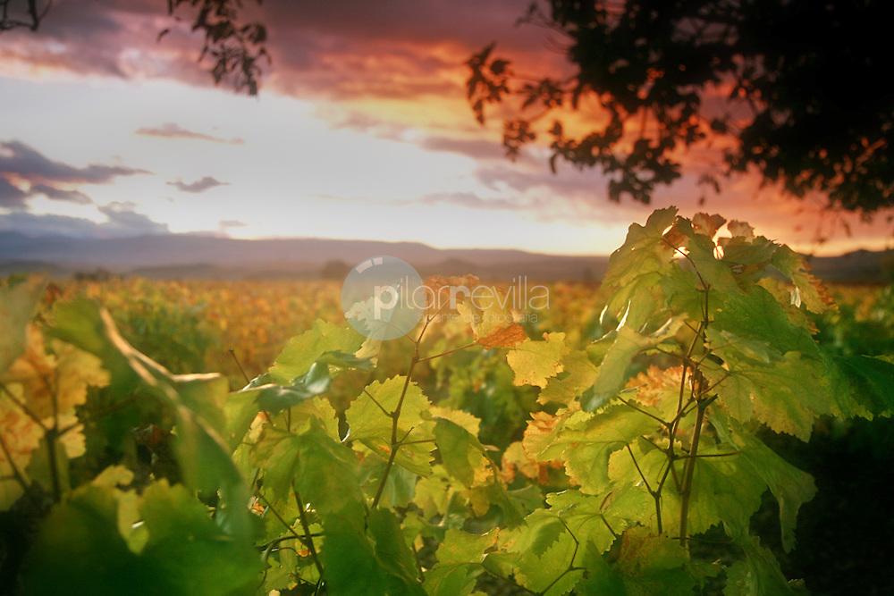 Viñedo otoño. La Rioja ©Daniel Acevedo / PILAR REVILLA