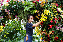 © Licensed to London News Pictures. 06/02/2020. London, UK. Kew apprentice ALICE McKEEVER applies the final touch to Orchids during press preview of the 25th Kew Orchid Festival at Kew Royal Botanical Gardens. This year's theme is around the wonders of Indonesia and the festival runs from 8 February to 8 March 2020. Photo credit: Dinendra Haria/LNP