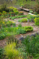 Spring in the Brick Garden at Glebe Cottage. Narcissus jonquilla 'Flore Pleno' in galvanised buckets, Tulipa 'Abu Hassan' in terracotta pots. Brick paths