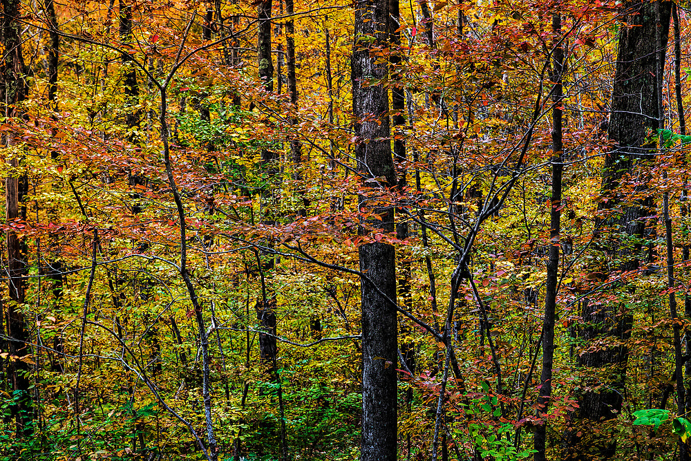 Abstract detail of a autumn woods, Cornwall Connecticut, USA