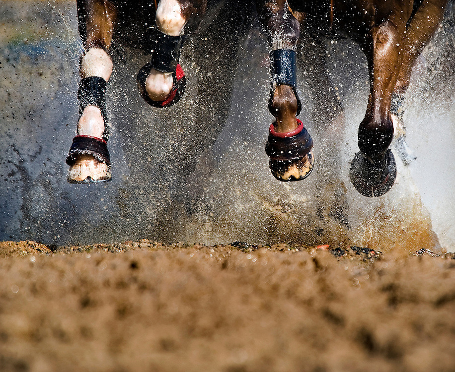 The Netherlands, Beesd, 06-09-2008.<br /> Equestrian, World championships four-horse carriage.<br /> The horses legs of the four-horse carriage of Koos de Rode.<br /> Photo: Klaas Jan van der Weij