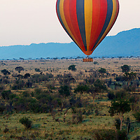 Africa, Kenya, Maasai Mara. Hot-Air Ballooning over wildlife of the Maasai Mara.