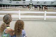 02: MISCELLANY HORSE PARK SHOW