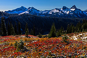 Fall color covers a meadow in the Paradise section of Mount Rainier National Park, Washington, against a backdrop of the Tatoosh Mountains.
