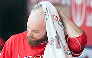Shane Robinson wipes off his head during a warm day at Angel Stadium Sunday.<br /> <br /> <br /> ///ADDITIONAL INFO:   <br /> <br /> angels.0404.kjs  ---  Photo by KEVIN SULLIVAN / Orange County Register  --  4/3/16<br /> <br /> The Los Angeles Angels take on the Chicago Cubs at Angel Stadium during a preseason game at Angel Stadium Sunday.<br /> <br /> <br />  4/3/16