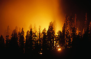 Prescribed fire on the forest floor lights up smoke in night time exposure, mixed-conifer forest, Yosemite National Park, CA, © David A. Ponton