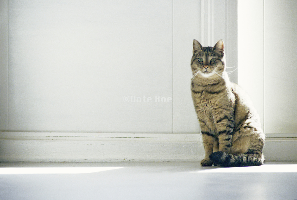 A striped cat sitting in front of a white door with eyes open