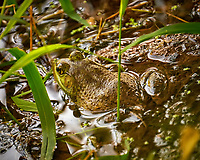 Kermit the Bullfrog. Image taken with a Fuji X-T1 camera and 100-400 mm OIS lens.