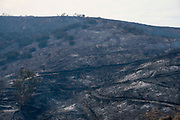 Burned area is seen during a brushfire, Sunday, Sept. 3, 2017, in Burbank, Calif. Several hundred firefighters worked to contain a blaze that chewed through brush-covered mountains, prompting evacuation orders for homes in Los Angeles, Burbank and Glendale.(Photo by Ringo Chiu)<br /> <br /> Usage Notes: This content is intended for editorial use only. For other uses, additional clearances may be required.