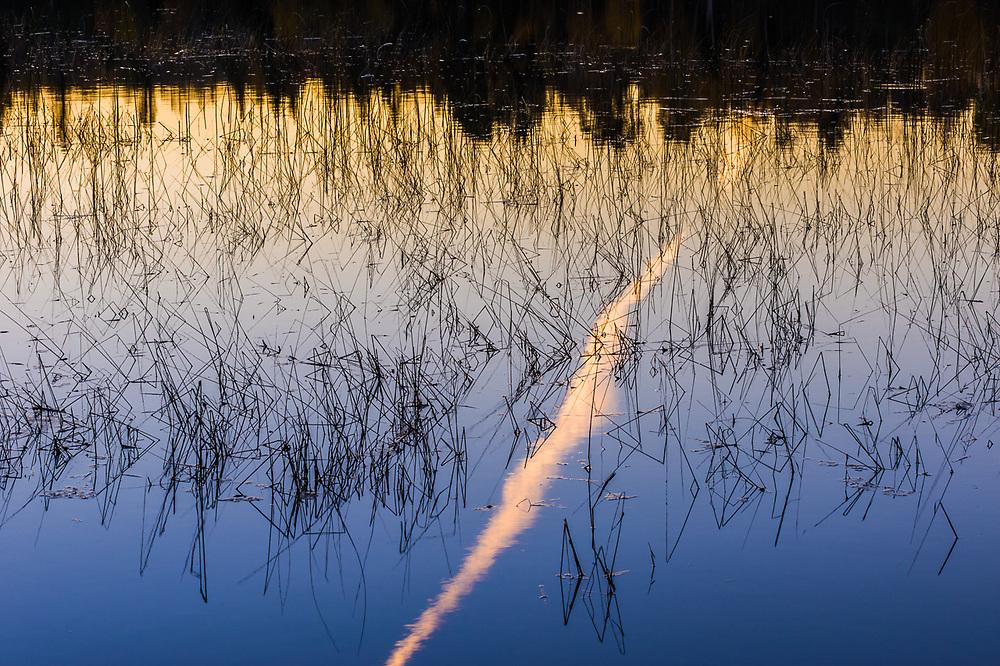 Visual pollution, jet contrail reflection among shoreline reeds, evening light, September, Schoolcraft Lake, Hubbard County, Minnesota, USA