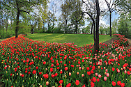 """Taken in the wonderful Park of the Castle of Pralormo in Piedmont, Italy, on a sunny afternoon of mid April. Every year at the beginning of the Spring (from the end of March to the beginning of May), the """"Messer Tulipano"""" exhibition (Mister Tulip) turns the park of the Castle into a kaleidoscope of colours, with thousands of tulip flowers blooming everywhere. This is a panorama stitched from six vertical frames."""