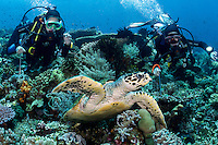 A pair of young divers (age 12) enjoy watching a Hawksbill Sea Turtle<br />  <br /> Shot in Indonesia