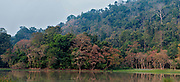 Beautiful forest with large trees and varied vegetation in the Burapahar-zone of Kaziranga NP, Assam, India.