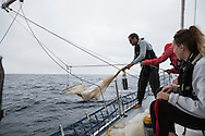 North Atlantic Ocean, September 2014.<br /> Skipper Eric Loss holds one of the trawls used to gather plankton's samples on board the Sea Dragon. © Chiara Marina Grioni