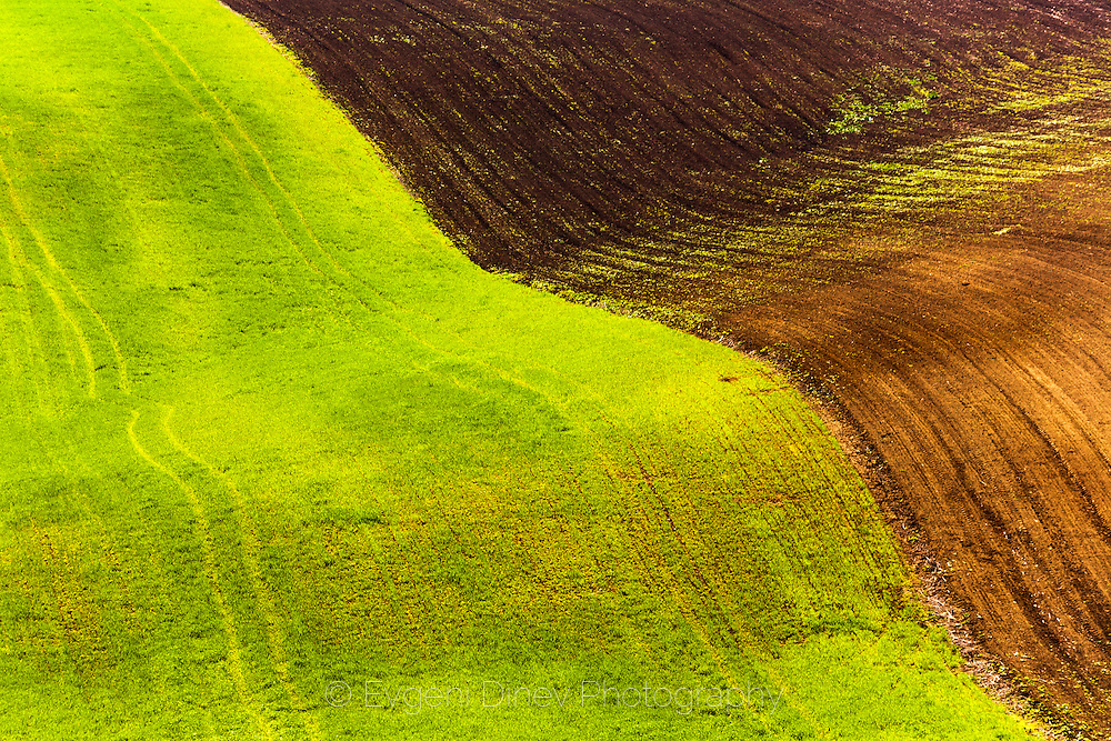 Green/Brown field