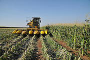 A John Deere Corn picker in a corn field ready for harvesting. Photographed in Israel, Golan Heights