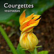 Pictures & Images of Courgettes & Marrows Fresh Vegetables