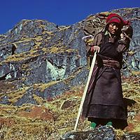 Neudona, a Sherpa woman (Sherpani) carries loads for trekkers en route to Nepal's remote Hinku Valley.