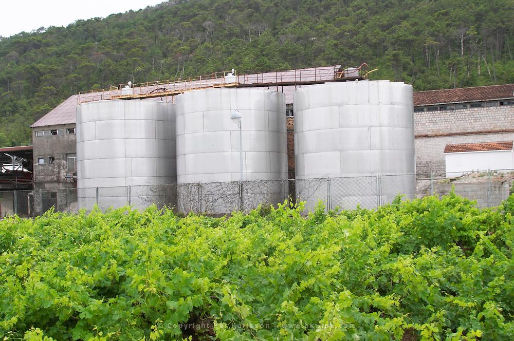 Outside wine fermentation tanks at a winery. Vineyard in the foreground. Potomje village, Dingac wine region, Peljesac peninsula. Dingac village and region. Peljesac peninsula. Dalmatian Coast, Croatia, Europe.