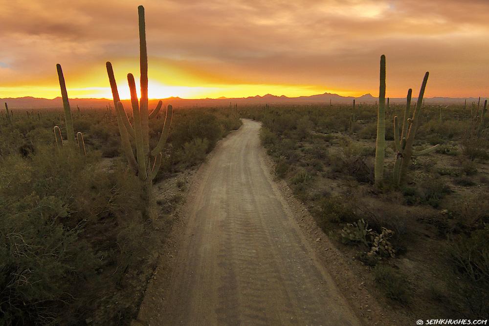 A road winds through the arid desert landscape in Saguaro National Park, Arizona.