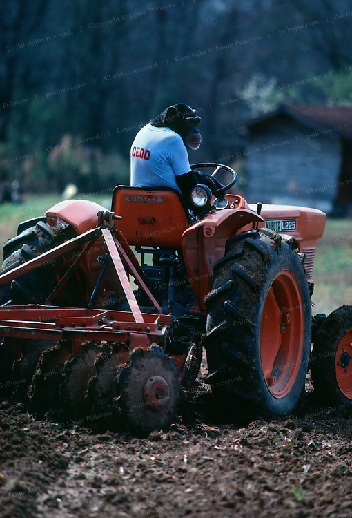Cedo plows a field with a tractor.  Circa 1981