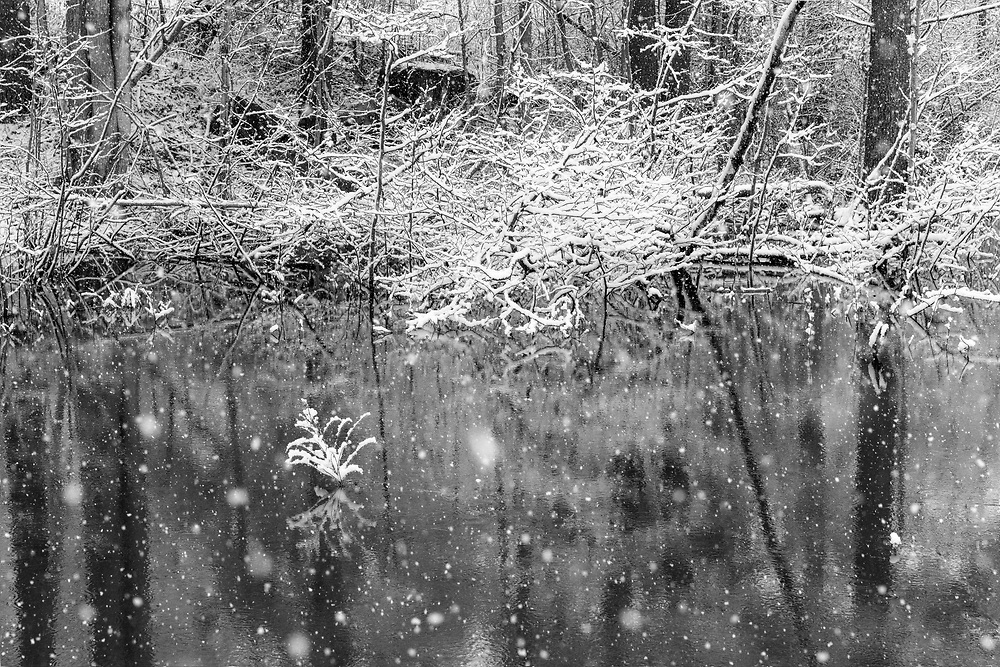 https://Duncan.co/snowing-at-the-pond