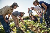 Farm Tours/Field Days
