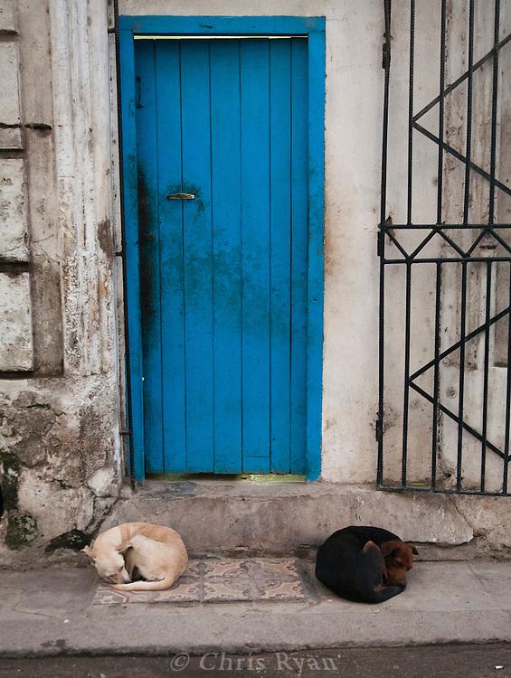 Dogs sleeping in doorway, Havana Vieja, Cuba
