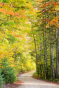 """Tree Tunnel in Upper Peninsula, MI<br /> <br /> 12"""" x 18"""" print <br /> <br /> See pricing page for more information.<br /> <br /> Please contact me for custom sizes and print options including canvas wraps, metal prints, assorted paper options, etc. <br /> <br /> I enjoy working with buyers to help them with all their home and commercial wall art needs."""