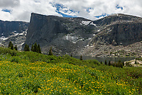 Yellow wildflowers bloom on the hillside above Lower Lost Twin Lake in the Cloud Peak Wilderness.