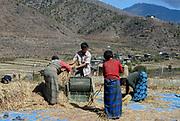 A farming family thresh the rice harvest using a pedal powered threshing machine. Paro, Druk Yul, Bhutan. 12 November 2007