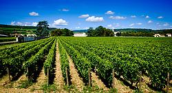 Vineyard near Beaune, Burgundy, France in summer<br /> <br /> (c) Andrew Wilson   Edinburgh Elite media