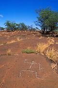 Hawaiian petroglyphs on ancient lava field at Puako, The Big Island, Hawaii