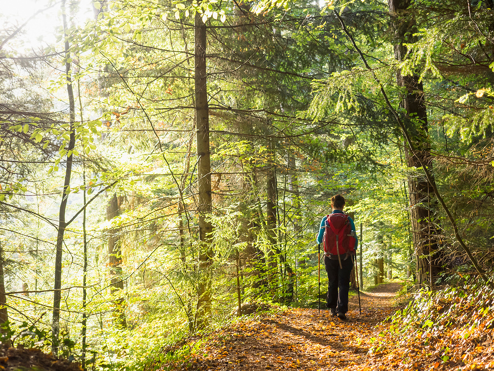 Woman on hiking tour in the Northern Black Forest, Bad Teinach-Zavelstein, Baden-Württemberg, Germany