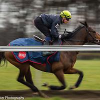 Galloping up Warren Hill, Newmarket