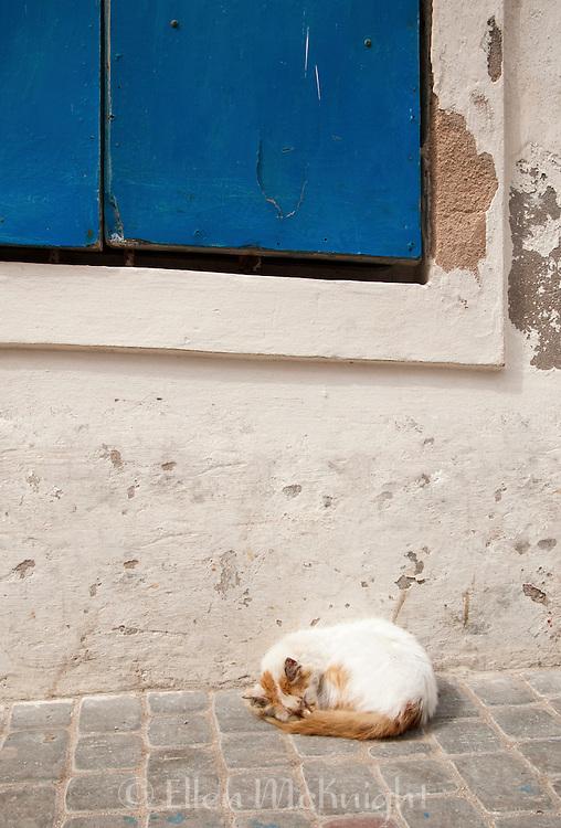 Cat sleeping on the sidewalk in Essouaria, Morocco