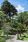 Jardin de Balata botanical garden, Fort-De-France, Martinique, France