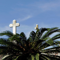 South America, Argentina, Buenos Aires. Crosses and palm at La Recoleta Cemetary.