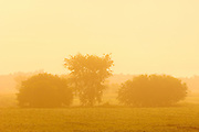 Pastoral scene with trees in field with fog at sunrise<br /> near Bourget<br /> Ontario<br /> Canada