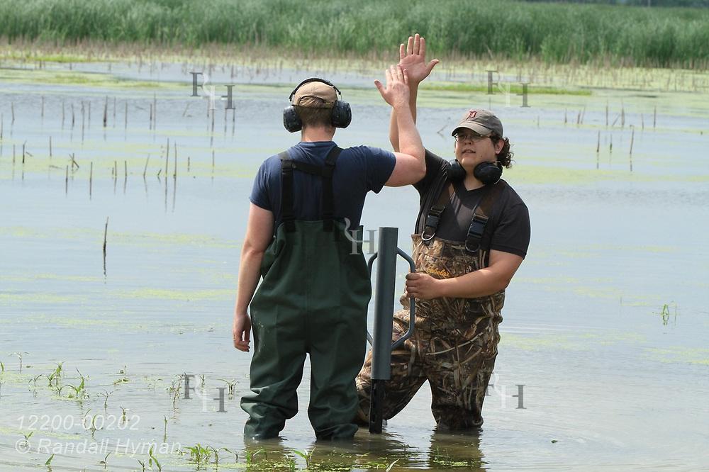 Hyfi field techs Nik Krantz (facing) and Matt Craddock give a high-five after driving post for water sensor deep into thick mud bottom of wetland at Shiawassee National Wildlife Refuge; Saginaw, Michigan.