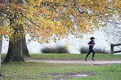 © Licensed to London News Pictures. 24/11/2020. <br /> Royal Tunbridge Wells, UK. A female runner enduring the cold autumnal weather at Dunorlan Park in Tunbridge Wells, Kent to get her daily coronavirus lockdown exercise. Photo credit:Grant Falvey/LNP