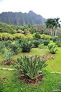Open garden space with Koolau Mountain Range in background. Oahu, Hawaii