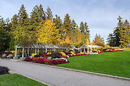 The last blooming annuals at the Rose and Perennial Garden in Stanley Park, Vancouver, British Columbia, Canada