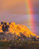 When the sun rose at Joshua Tree National Park, a vivid rainbow appeared. The rainbow was almost at a 90 degree angle to the ground. This can only happen right at sunrise or sunset.<br />