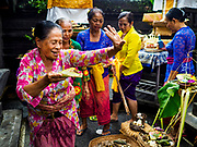 """08 AUGUST 2017 - UBUD, BALI, INDONESIA: Women dance during a ceremony to honor a family temple in Ubud, Bali. Balinese Hindus have a 210 day calender and every almost every family compound on Bali has a family temple. Once a year (or every 210 days) families celebrate the """"birthday"""" of their temple with a ceremony.     PHOTO BY JACK KURTZ"""